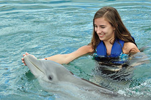 Marco Island Florida Swimming With Dolphins
